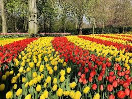 keukenhof 2019 red and yellow tulips