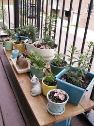 Small Picture small plants apartment patio garden ideas 630 hostelgardennet