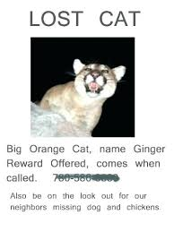 Lost Cat Template Lost Cat Poster Ate This Missing Pet Flyers Dog