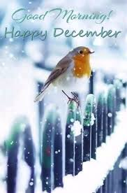 Good Morning December Quotes Best of Good Morning Happy December Sunsets