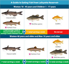 Catfish Chart Fish The Rez You May Want To Do A Little More Catch And