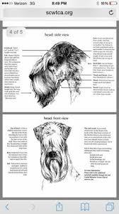 456 Best Grooming Images In 2019 Dog Grooming Pet