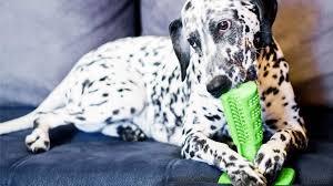 bristly dog toothbrush bristly dog toothbrush