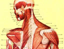 spieren nek hoofd