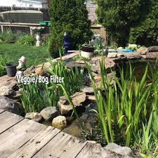 this picture is of a pond with relatively new veggie bog filter where water flow
