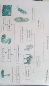 Animal Classification Chart Flow Chart Of Living Organism From Chapter Animal