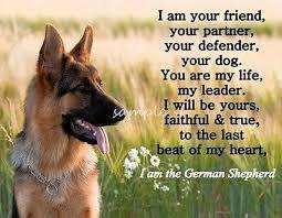 Image result for german shepherds loyalty