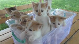 kittens. Delighful Kittens Kittens Meowing Too Much Cuteness To YouTube