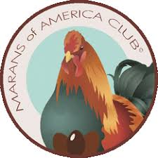 Image result for Marans poultry club