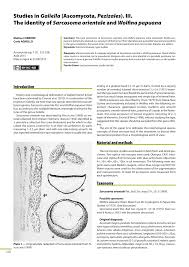 Studies In Galiella Ascomycota Pezizales Iii The Identity Of