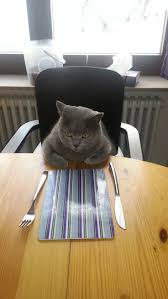 80 best images about FAT cats on Pinterest