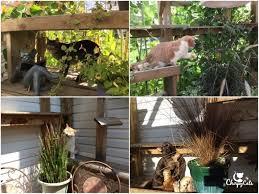 a cat safe garden of non toxic plants