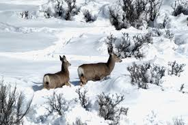 Image result for Idaho wildlife