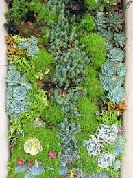 Small Picture Succulent Garden Houzz