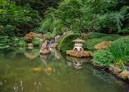 georgeofthegorge koi pool in japanese gardens portland oregon by georgeofthegorge