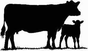 show heifer silhouette. Modren Show Cow And Calf Throughout Show Heifer Silhouette I