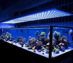 this is the latest technological advances and the most interesting part of led aquarium lighting