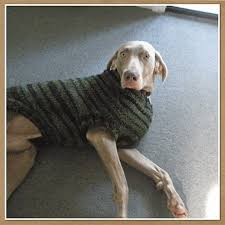 Free Knitted Dog Sweater Patterns Awesome Crochet Large Dog Sweater Crochet And Knit