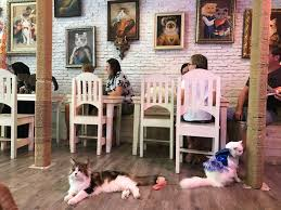 Image result for iceland cat cafe images