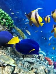moving fish wallpaper for phones. Wonderful Moving Preview Wallpaper Fish Algae Corals Underwater Intended Moving Fish Wallpaper For Phones S