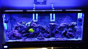 marine aquarium led lighting reviews with orbit led storm mode you and 8 maxresdefault on 1920x1080 light 1920x1080px