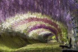 color garden. Beautiful, Beauty, Bench, Color, Colour, Cool Garden, Cream, Day Color Garden