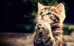 cute kittens wallpapers for mobile. Simple For Cute Kitten Wallpaper To Kittens Wallpapers For Mobile R