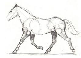 horses drawings. Unique Horses Drawing Lesson For Beginner Artists The Proportions Of A Horse  To Horses Drawings H