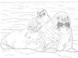 Small Picture Baby Walrus on Moms Back coloring page Free Printable Coloring Pages
