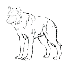 cute baby wolf anime. Unique Cute Cute Wolf Coloring Pages Anime Es Pack  Sheets Amazing E Sheet   In Cute Baby Wolf Anime