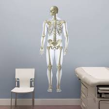 Human Skeleton Wall Chart Skeletal System Front Life Size Body Part Chart Removable Wall Graphic