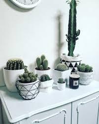 Beautiful White Cactus Pots