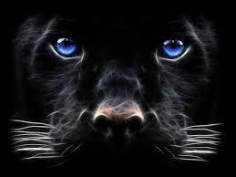 black tiger with blue eyes wallpaper. Interesting Tiger 3D Black Tiger Blue Eyes Intended With Wallpaper M