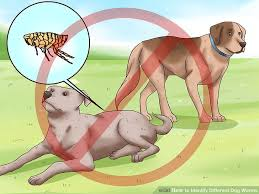 Dog Worm Identification Chart How To Identify Different Dog Worms With Pictures Wikihow
