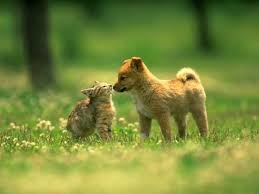 dogs and cats wallpaper. Contemporary Wallpaper Dogs Vs Cats Images Dogs And Cats HD Wallpaper Background Photos On And Wallpaper