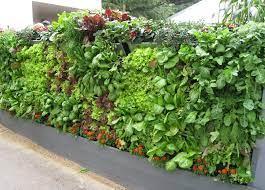 instant vertical gardens