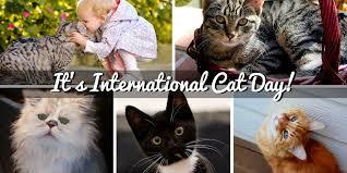 Image result for Cat International Day images