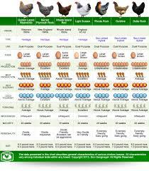 Chicken Breed Chart Pdf Chicken Egg Size Comparison Chart Bedowntowndaytona Com