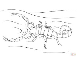 Small Picture Striped Bark Scorpion coloring page Free Printable Coloring Pages