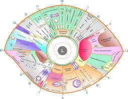 Eye Reflexology Chart 10 Pcs Free Downlaod Iriscope