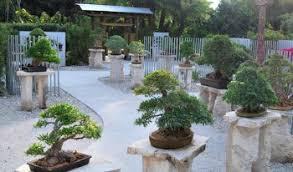 bonsai gardens. Heathcoat Botanical Gardens Bonsai