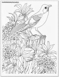 Realistic Bird Coloring Pages Coloring Daily
