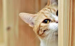 nickname cute cat widescreen hd wallpaper resolotion 1 600px cute