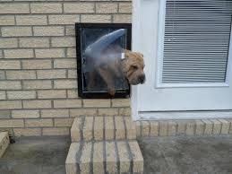 dog doors dog doors for sliding glass doors you