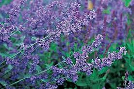 flowers for garden. Top 10 Purple Plants For Your Flower Garden Flowers