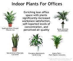 Small plant for office desk Office Cabin Office Desk Plants Best Office Plants Impressive Small Desk Indoor For Offices Interiors That Need No Office Desk Plants Chernomorie Office Desk Plants Office Plants Office Plants Office Desk Plants