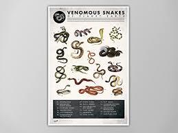 Amazon Com Snake Chart Art Print Snake Chart Natural