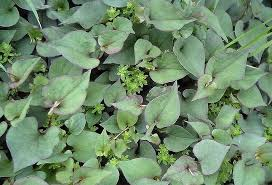Green Leafy Vegetables Names List With Pictures