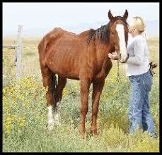 Dream Catchers Horse Rescue Colorado Springs Dreamcatchers Equine Rescue Home 1