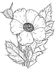 Free Coloring Pages Of Large Flowers Poppy Flower Coloring Page